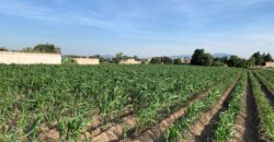 Terreno en Venta en Metepec